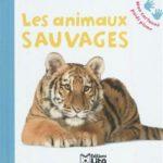 Les animaux sauvages - Lito - Les lectures de Liyah