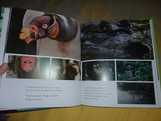 Amazonia 1 - DLMJ - Les lectures de Liyah