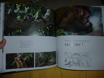 Amazonia 2 - DLMJ - Les lectures de Liyah