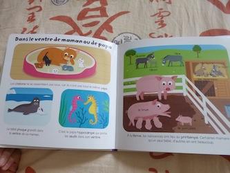 Les bebes Animaux 1 - Larousse - Les lectures de Liyah
